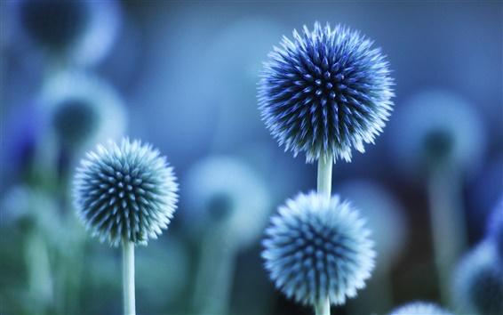 blaue blumen.png